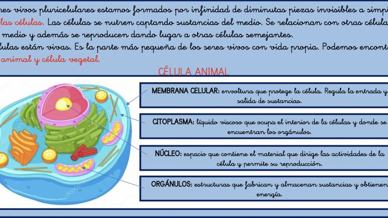 Tema 1 Los seres vivos 6º Primaria