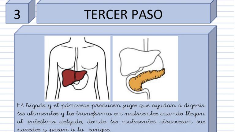 La nutrición: el aparato digestivo, el respiratorio, el circulatorio y el excretor