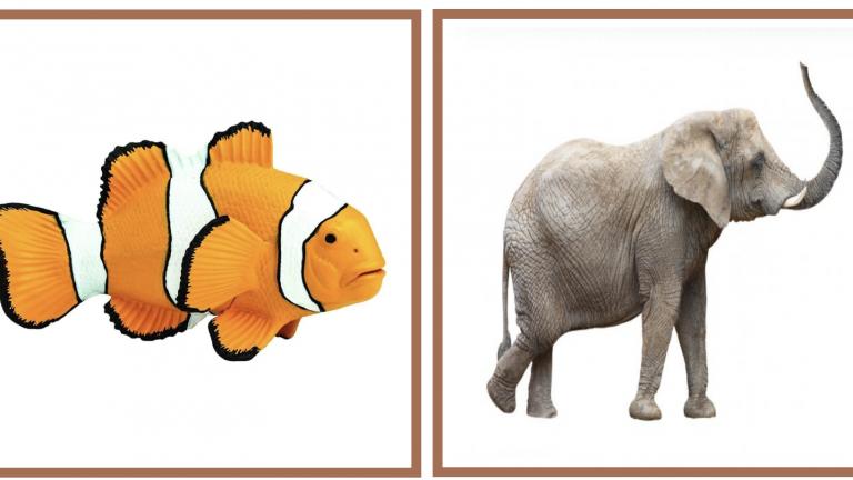 Asociación foto-pictograma